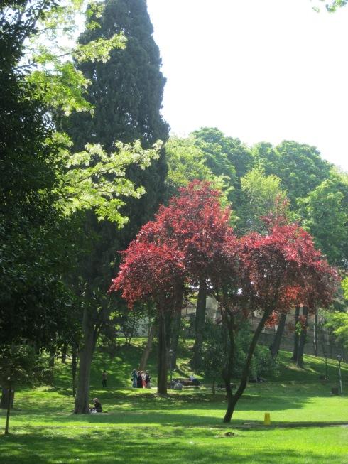Стамбул. район Султанахмет. в парке Гюльханэ